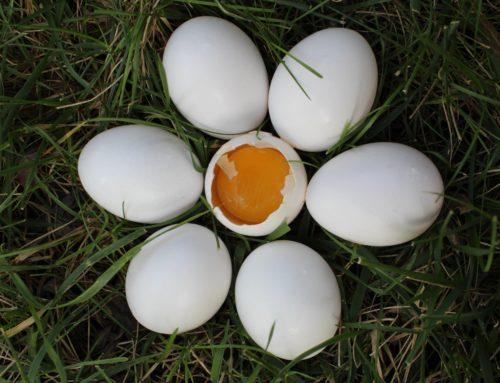 Italian Eggs-periment